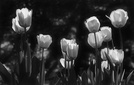 Flowers and such, in B&W